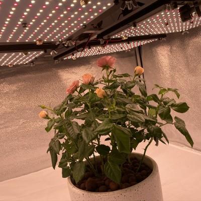 480W Medical Flowering High Power