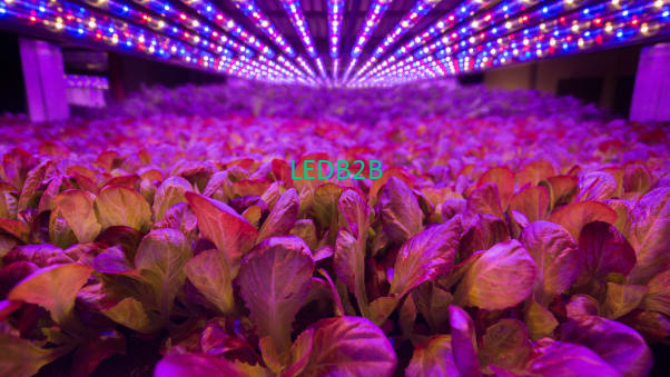 Airline/convenience store cooperates with vertical farm company to launch innovative services